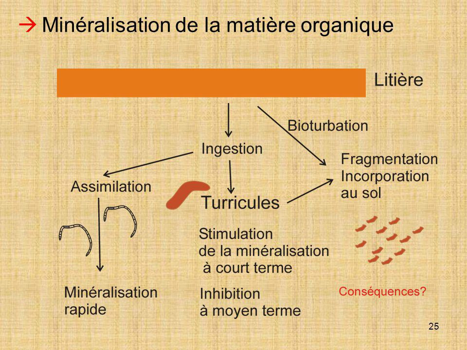  Minéralisation de la matière organique