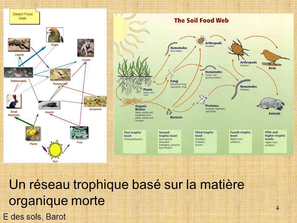 Un réseau trophique basé sur la matière organique morte