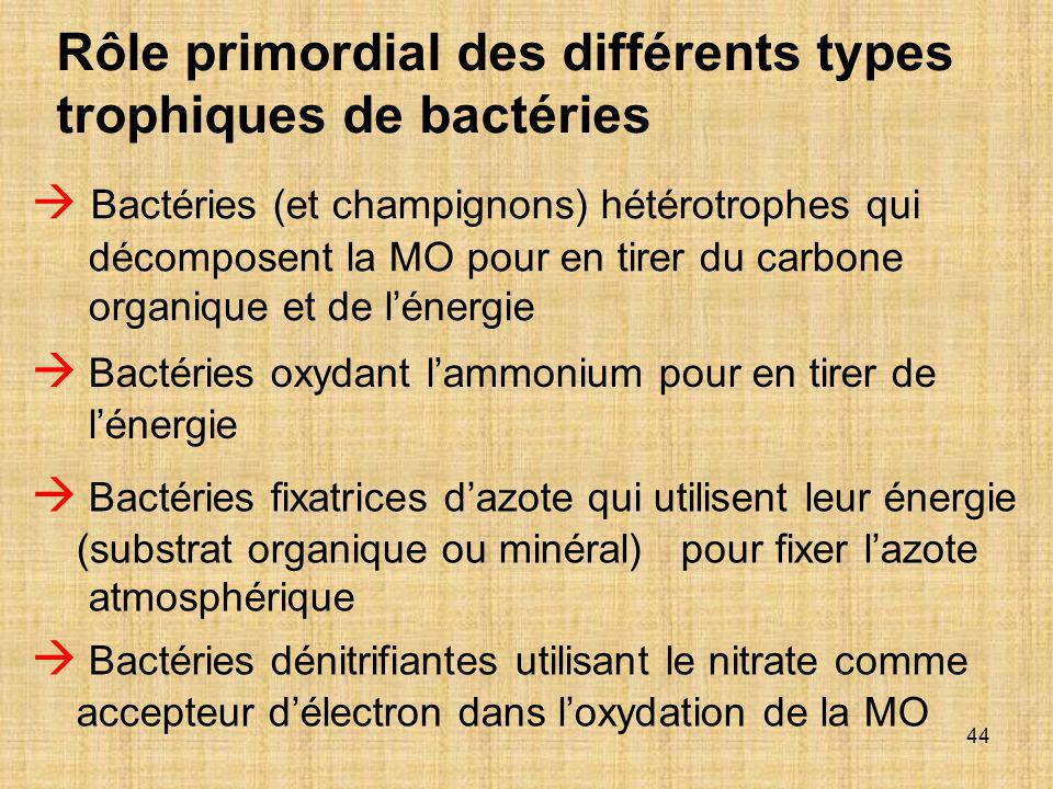 Rôle primordial des différents types trophiques de bactéries