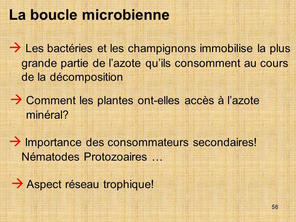 La boucle microbienne