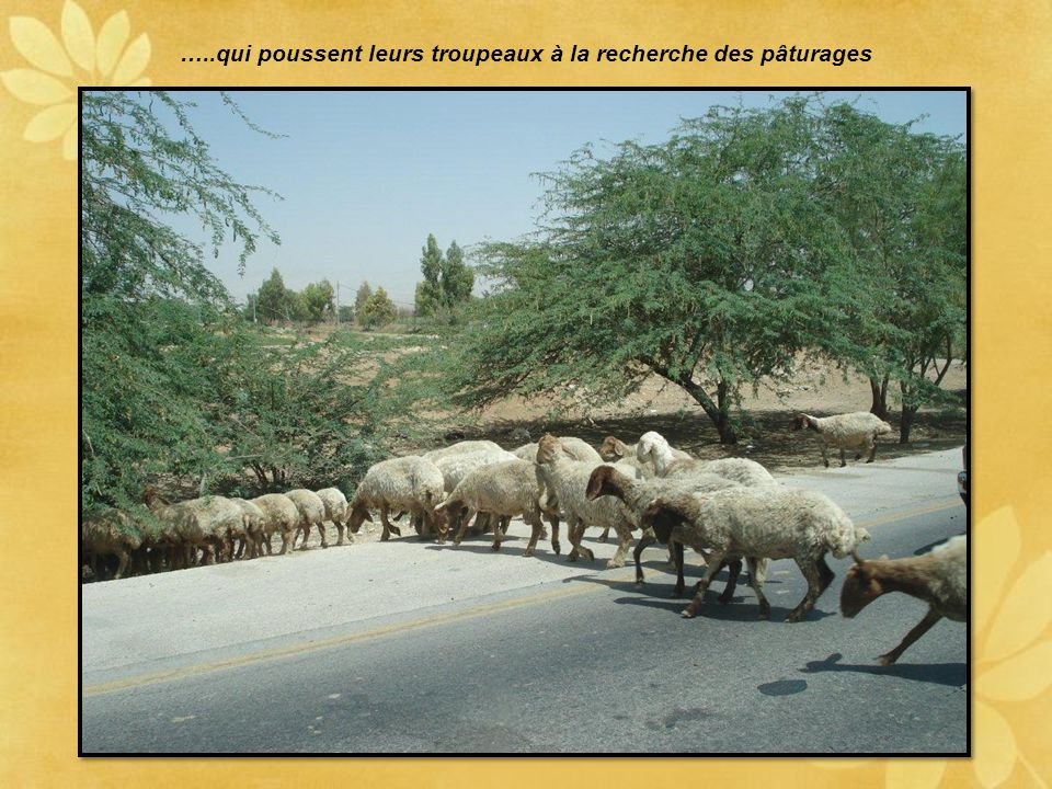…..qui poussent leurs troupeaux à la recherche des pâturages