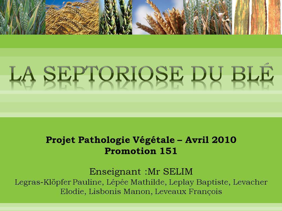 Projet Pathologie Végétale – Avril 2010