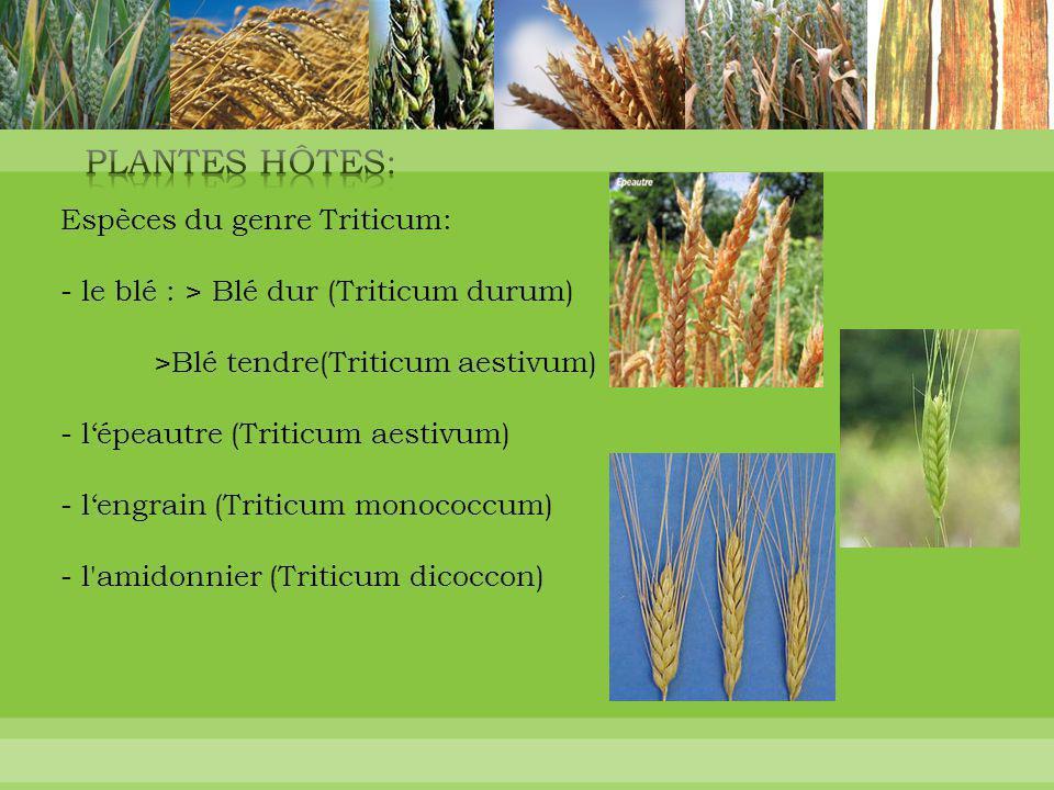 Plantes Hôtes: Plantes Hôtes: