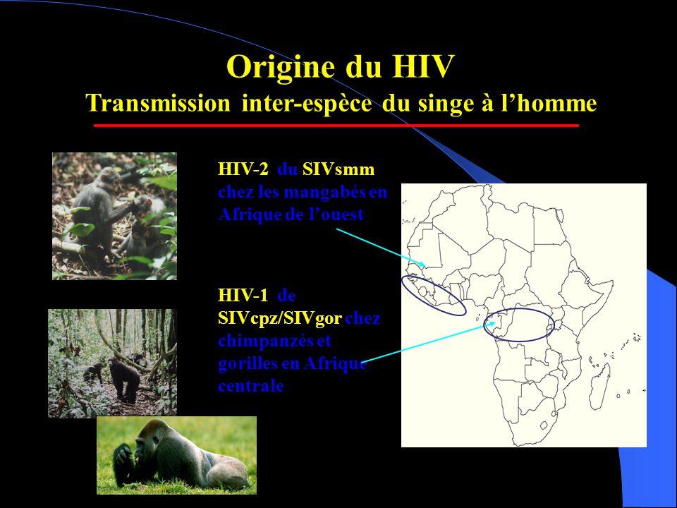 Transmission inter-espèce du singe à l'homme
