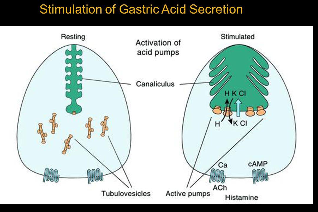 Stimulation of Gastric Acid Secretion
