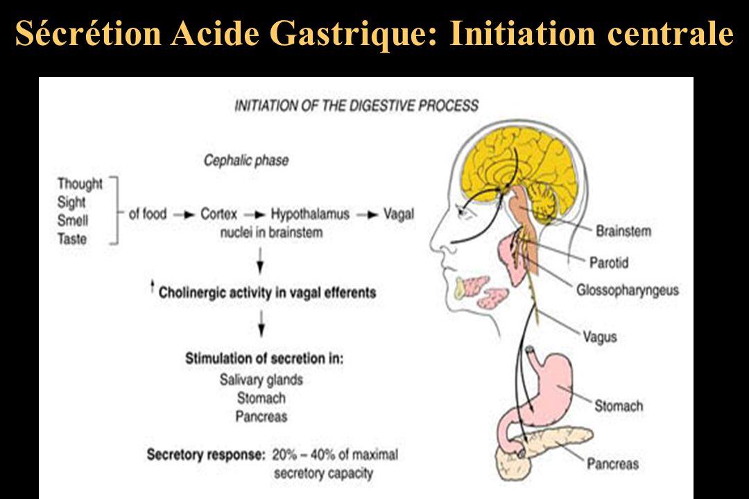 Sécrétion Acide Gastrique: Initiation centrale