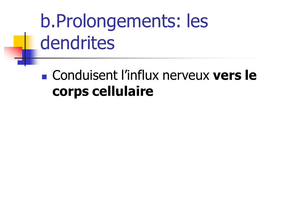 b.Prolongements: les dendrites