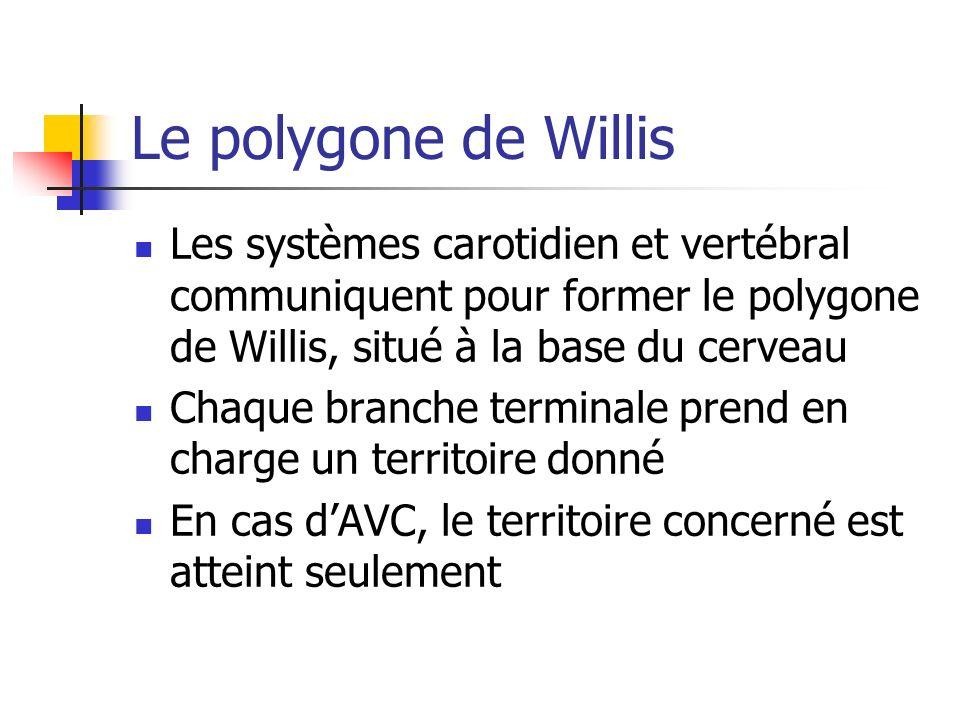 Le polygone de Willis Les systèmes carotidien et vertébral communiquent pour former le polygone de Willis, situé à la base du cerveau.
