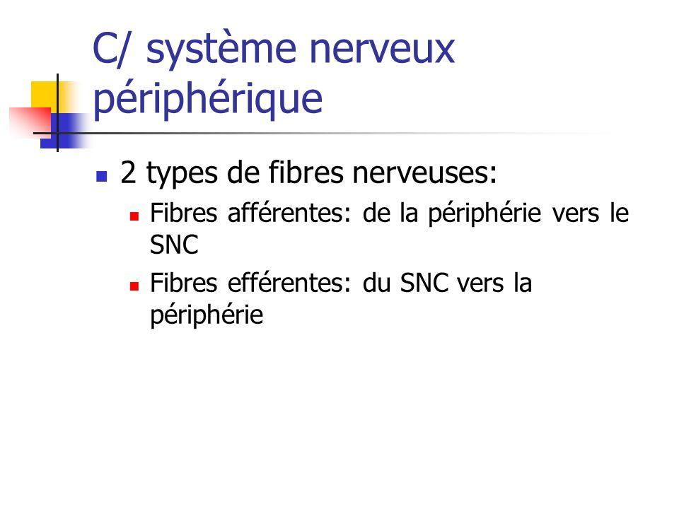 C/ système nerveux périphérique
