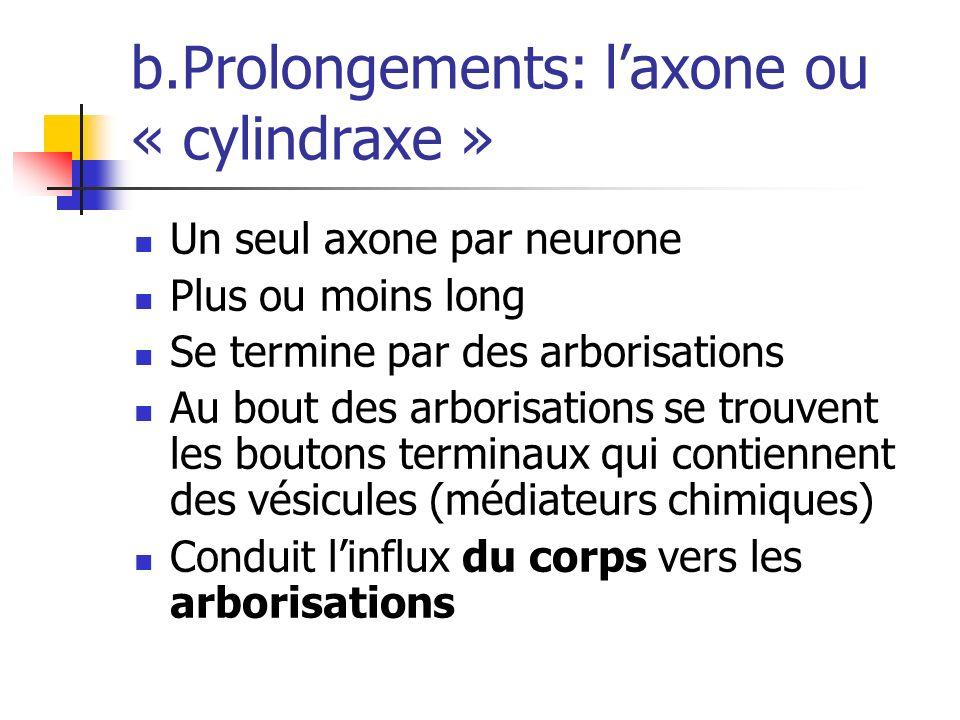 b.Prolongements: l'axone ou « cylindraxe »