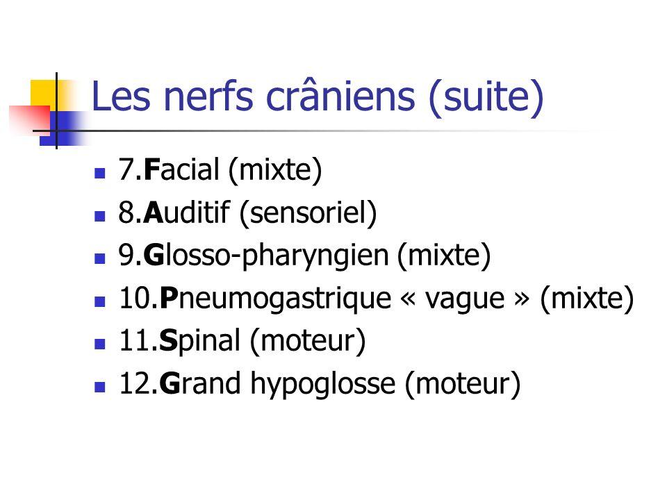Les nerfs crâniens (suite)