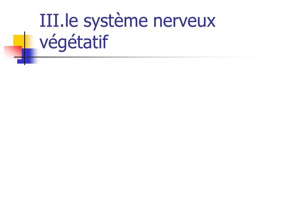 III.le système nerveux végétatif