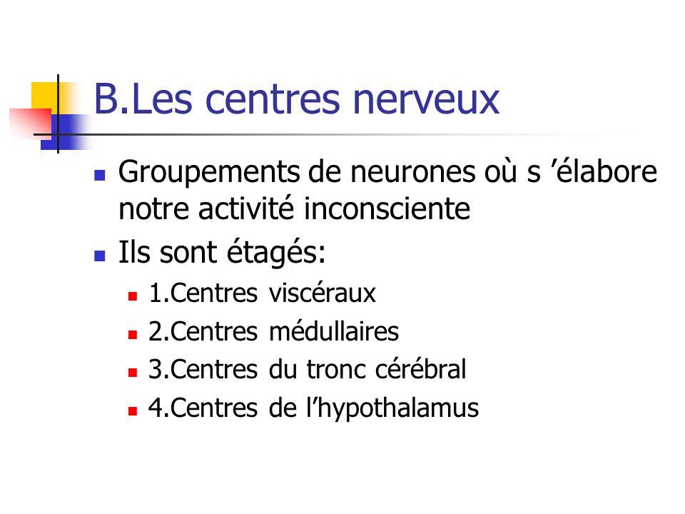 B.Les centres nerveux Groupements de neurones où s 'élabore notre activité inconsciente. Ils sont étagés: