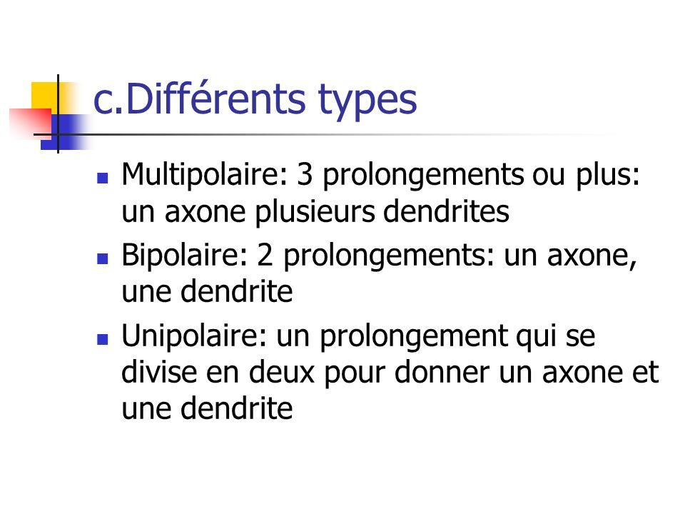 c.Différents types Multipolaire: 3 prolongements ou plus: un axone plusieurs dendrites. Bipolaire: 2 prolongements: un axone, une dendrite.
