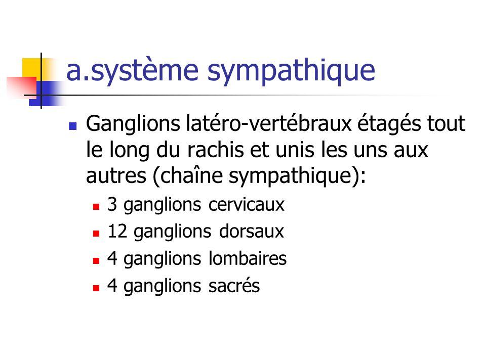 a.système sympathique Ganglions latéro-vertébraux étagés tout le long du rachis et unis les uns aux autres (chaîne sympathique):