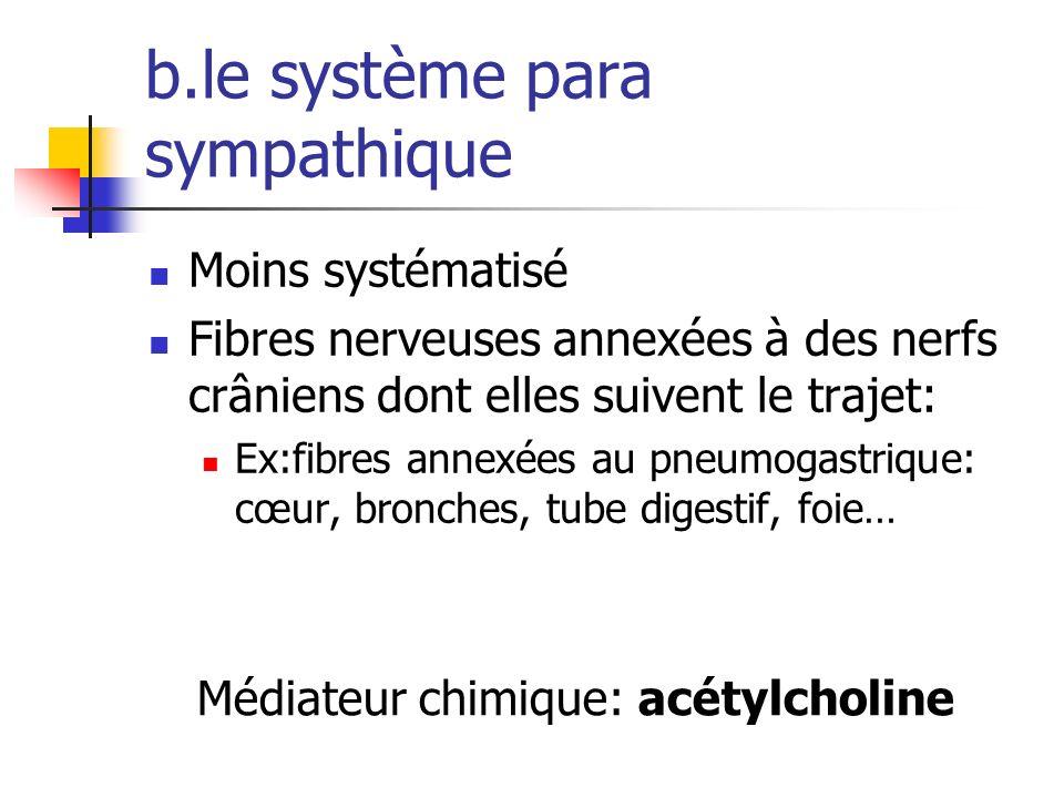 b.le système para sympathique