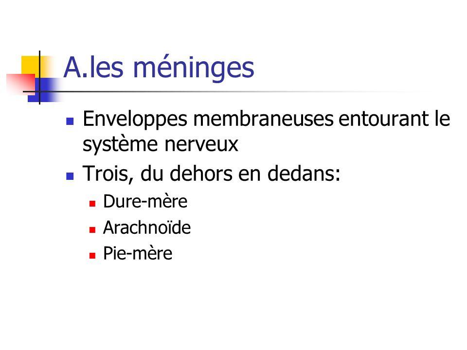 A.les méninges Enveloppes membraneuses entourant le système nerveux