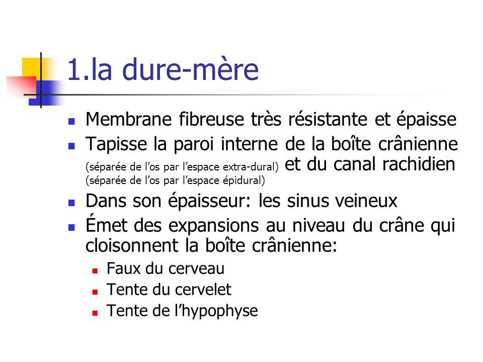 1.la dure-mère Membrane fibreuse très résistante et épaisse