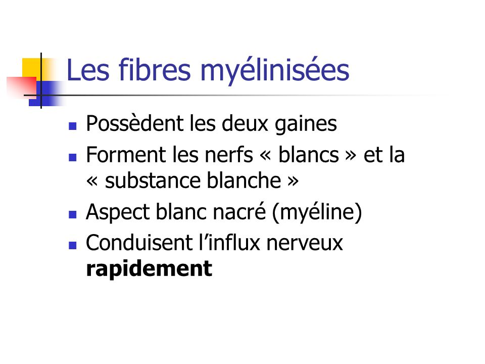 Les fibres myélinisées