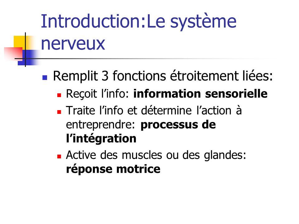 Introduction:Le système nerveux