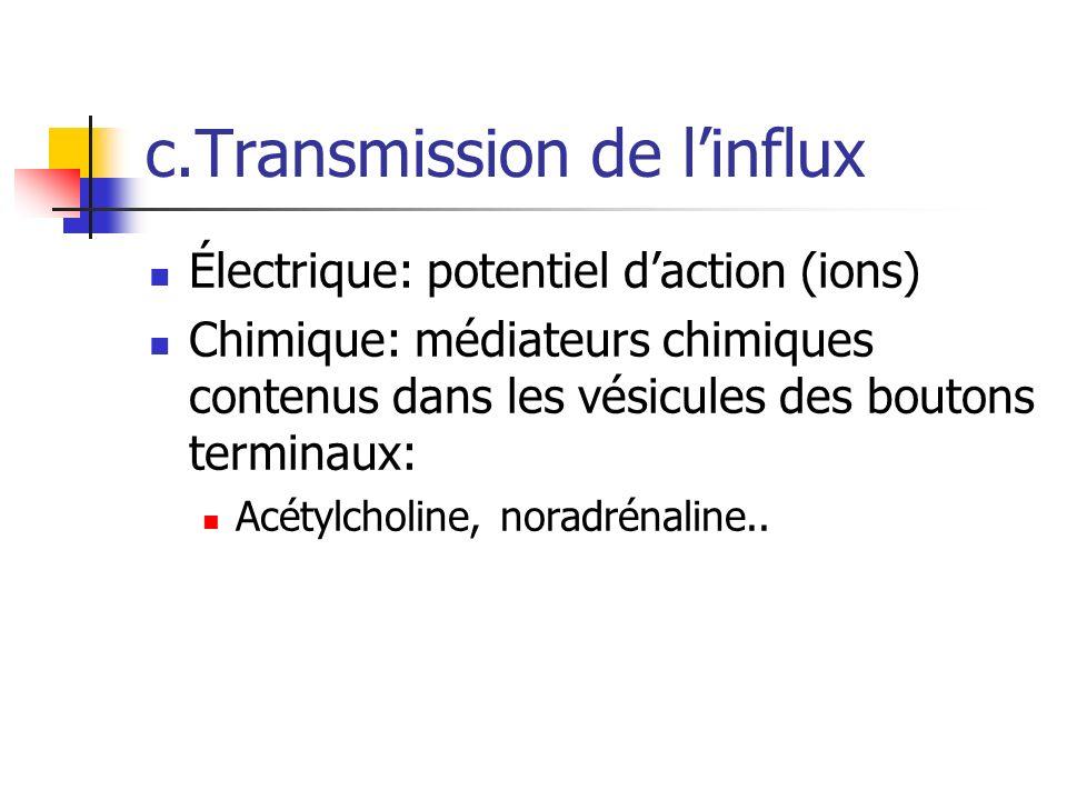 c.Transmission de l'influx