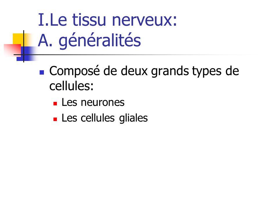 I.Le tissu nerveux: A. généralités