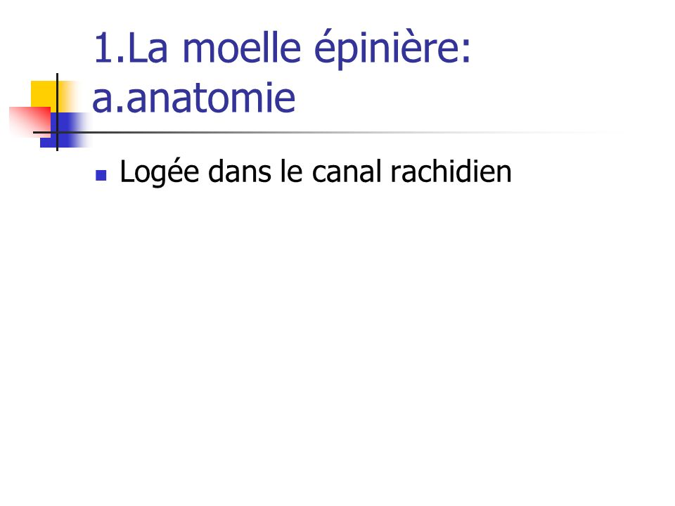 1.La moelle épinière: a.anatomie