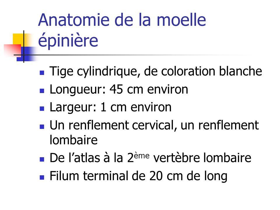 Anatomie de la moelle épinière