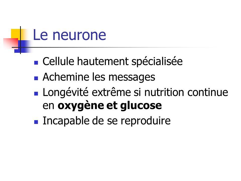 Le neurone Cellule hautement spécialisée Achemine les messages