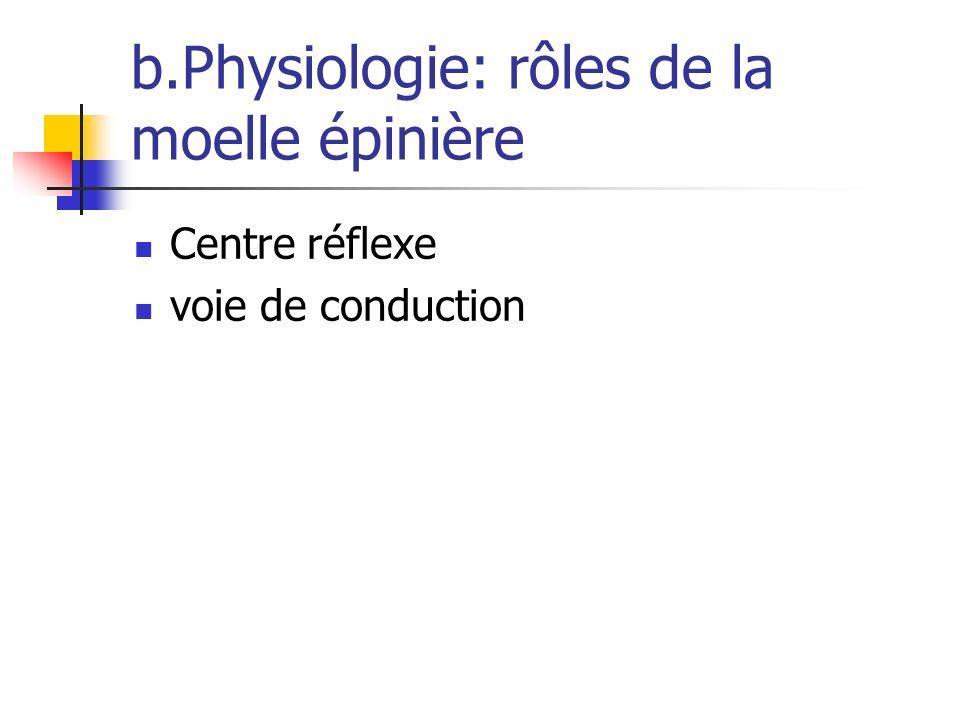 b.Physiologie: rôles de la moelle épinière