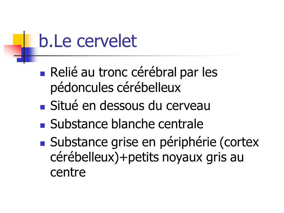 b.Le cervelet Relié au tronc cérébral par les pédoncules cérébelleux