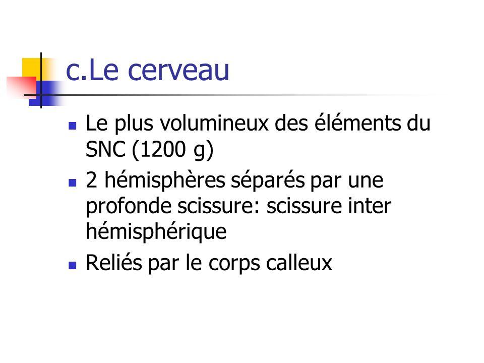 c.Le cerveau Le plus volumineux des éléments du SNC (1200 g)