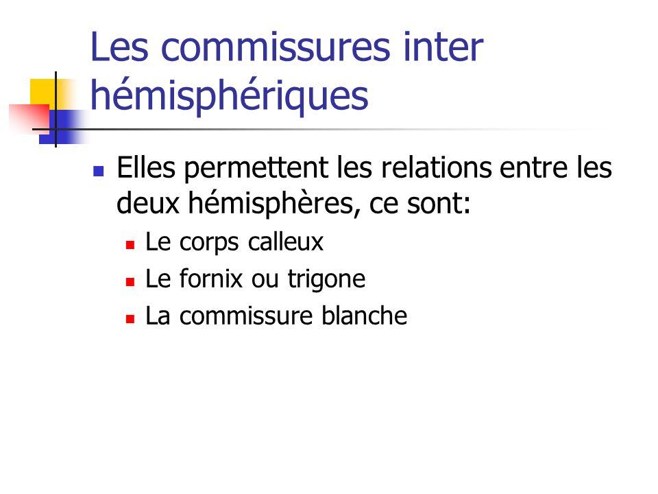 Les commissures inter hémisphériques