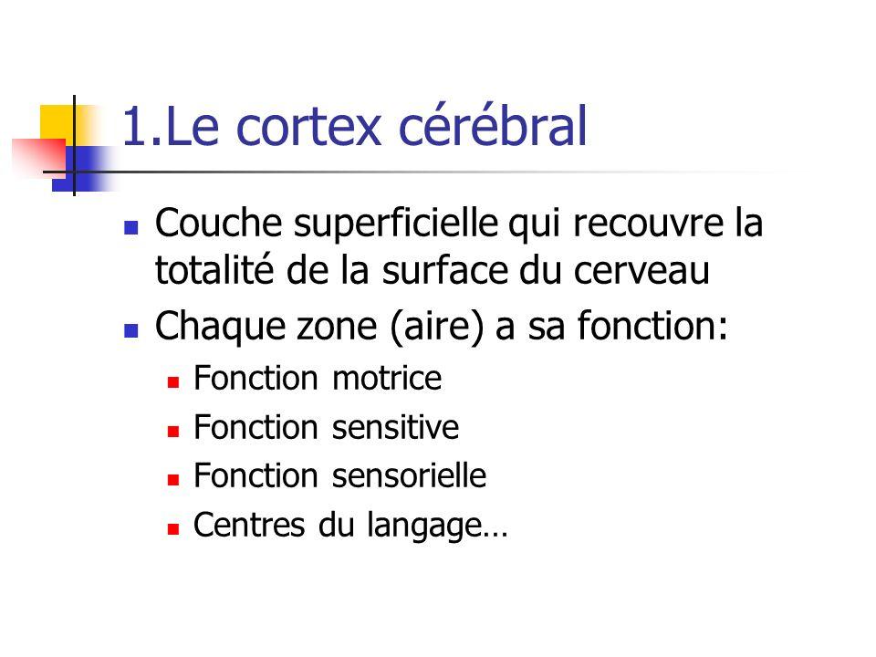1.Le cortex cérébral Couche superficielle qui recouvre la totalité de la surface du cerveau. Chaque zone (aire) a sa fonction:
