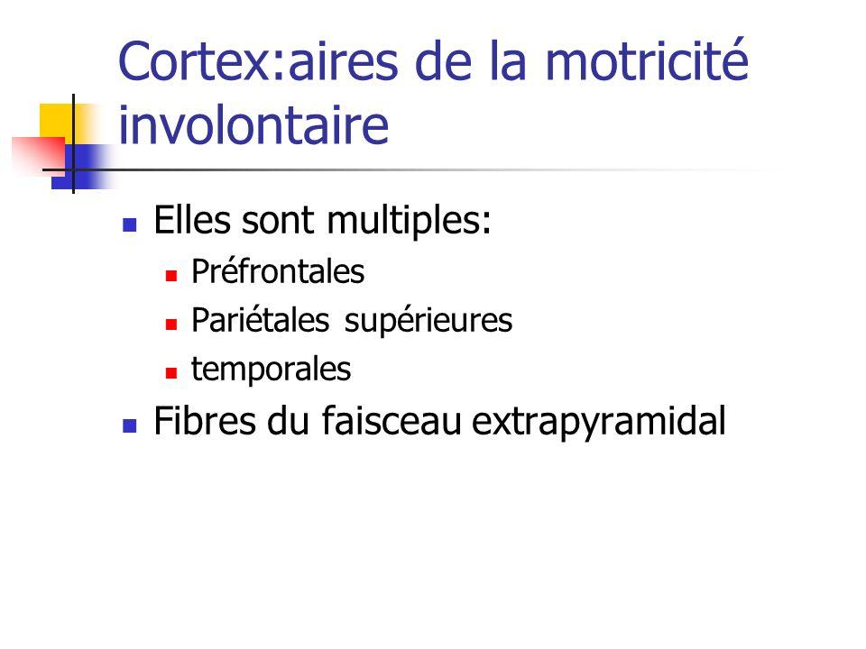 Cortex:aires de la motricité involontaire