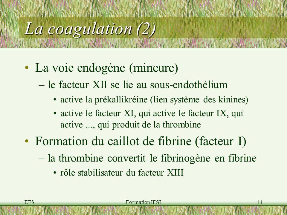 La coagulation (2) La voie endogène (mineure)