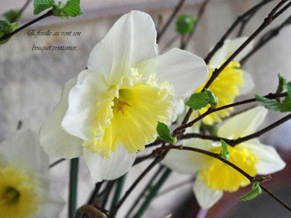 Effeuille au vent son bouquet printanier,