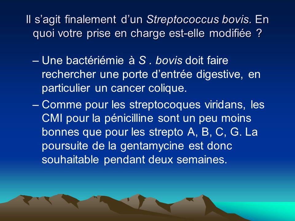 Il s'agit finalement d'un Streptococcus bovis