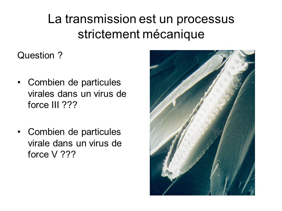 La transmission est un processus strictement mécanique