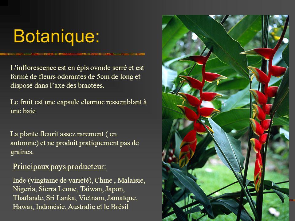 Botanique: Principaux pays producteur: