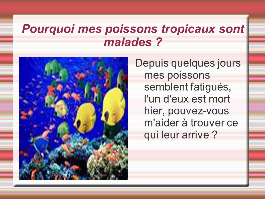 Pourquoi mes poissons tropicaux sont malades