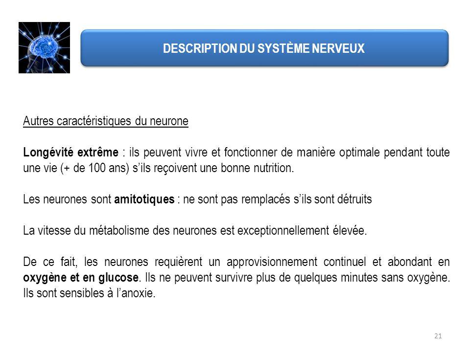 DESCRIPTION DU SYSTÈME NERVEUX