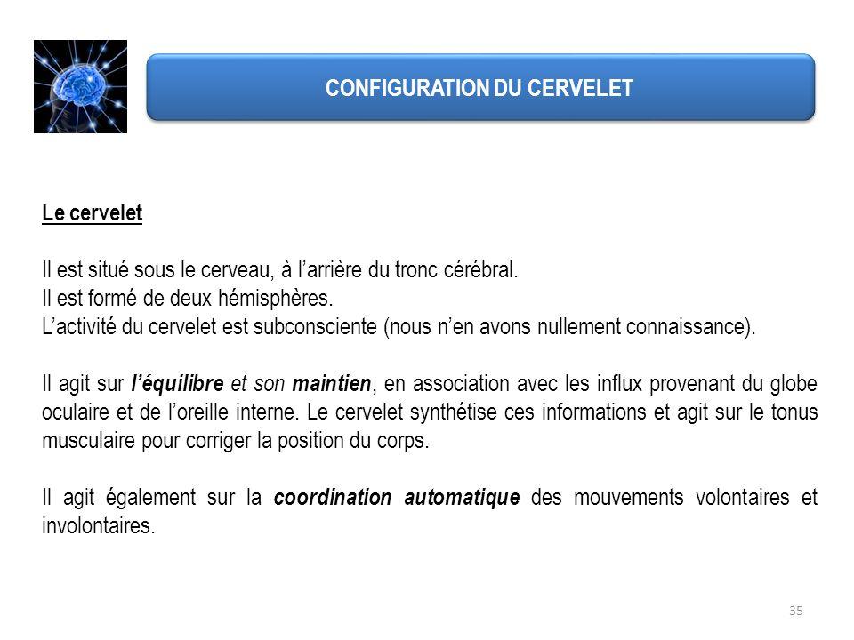 CONFIGURATION DU CERVELET