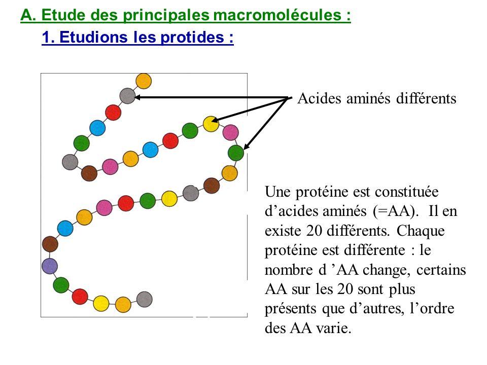 A. Etude des principales macromolécules :