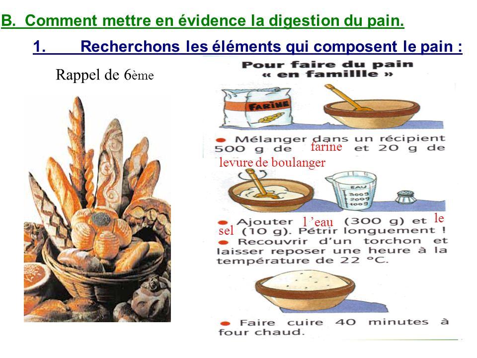 B. Comment mettre en évidence la digestion du pain.