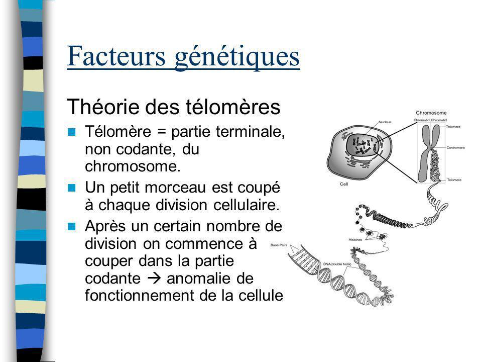 Facteurs génétiques Théorie des télomères