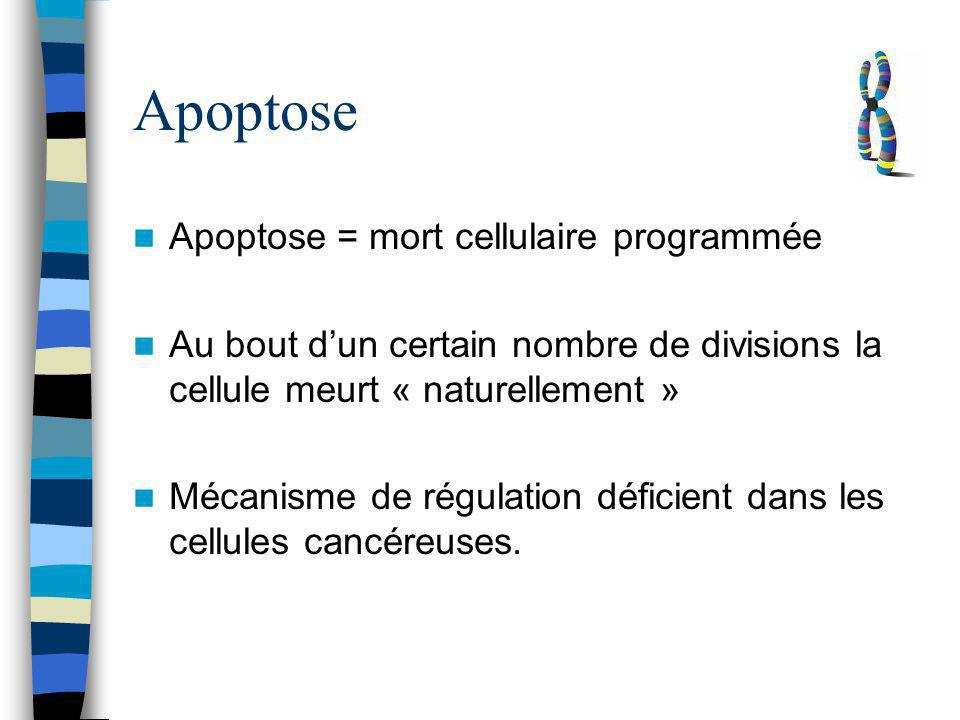 Apoptose Apoptose = mort cellulaire programmée