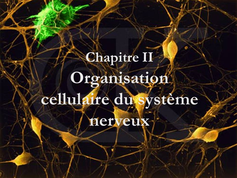 Chapitre II Organisation cellulaire du système nerveux