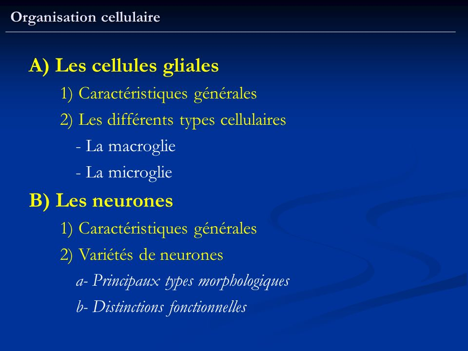 A) Les cellules gliales