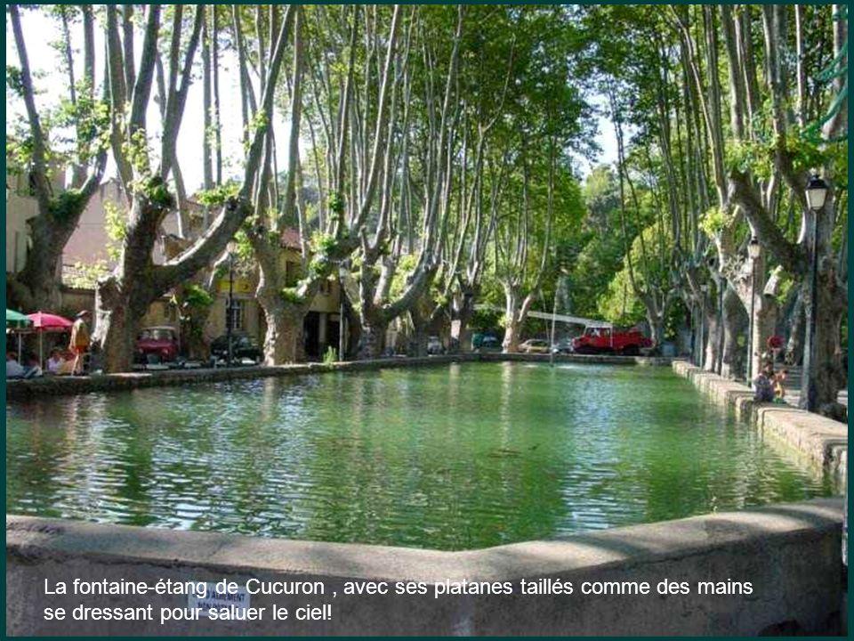 La fontaine-étang de Cucuron , avec ses platanes taillés comme des mains